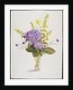Blue Hydrangea with Yellow Loosestrife by Christopher Ryland