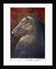 Horse's Head by Lincoln Seligman
