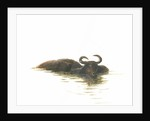 Water Buffalo 2 by Lincoln Seligman
