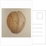 Coconut, Sri Lanka by Lincoln Seligman