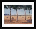 Hay Bales and Pines, Pienza by Lincoln Seligman