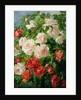 Pink Roses by Pierre Garnier