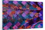Feather by Scott J. Davis
