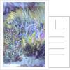 Wild Flowers by Sophia Elliot