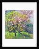 Blossom Delight by Sylvia Paul