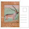 Ibex, Mughal by Indian School