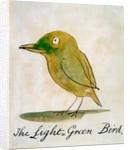 The Light Green Bird by Edward Lear
