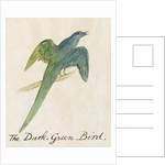 The Dark Green Bird by Edward Lear