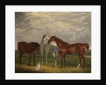 Three Horses of the 2nd Lord de Tabley and His Dog, 'Vic', 1838 by Henry Calvert