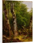 Birch and Maples, 1855 by Asher Brown Durand