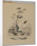 Three Pheasants, 1873 by James Ryder van Brunt