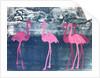 Flamingos by Sarah Thompson-Engels