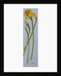 Four Daffodil Stems by Joan Thewsey