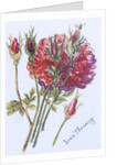 Little Red Roses by Joan Thewsey