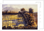 Field with Long Shadows by Joan Thewsey