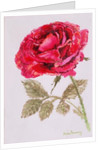 A Red Rose by Joan Thewsey
