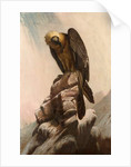Eagle on Cliff by School English