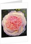 Victorian Rose by William Ireland