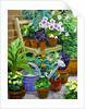 Pots by William Ireland