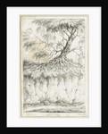 Dudley - Tree by Luke Booker
