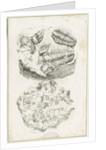 Dudley - Fossils by Luke Booker