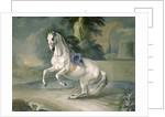 The White Stallion 'Leal' en levade by J.G. & Brand