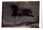 The black horse 'Curioso' performing a Capriole by Johann Georg Hamilton
