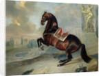 The dark bay horse 'Valido' performing a Levade movement by Johann Georg Hamilton