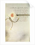 The 'Pragmatic Sanction' issued by Emperor Charles VI in Germany by Unknown