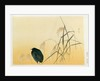 Blackbird, Edo Period by Japanese School