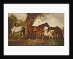 Mare and Foals by George Stubbs