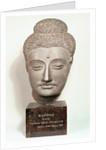 Head from a statue of the Buddha by Indian School