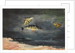 Fish and Butterflies, 1900 by Winslow Homer