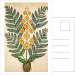 Fern with yellow flowers by French School