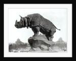 Rhinoceros by Adolphe Giraudon