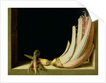 Still Life with a Cardoon by Juan Sanchez Cotan