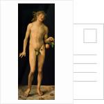 Adam by Albrecht Dürer or Duerer