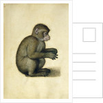 A Monkey by Albrecht Dürer or Duerer