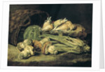 Still Life with Mushrooms by Jan Fyt