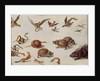 The Enemies of Snakes by Jan van