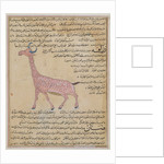 A Giraffe by Islamic School