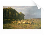 Flock of Sheep in a Landscape by Charles Emile Jacque