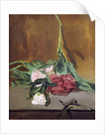 Stem of Peonies and Secateurs by Edouard Manet