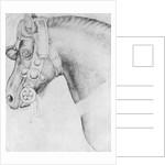Head of a horse by Antonio Pisanello