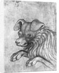 Head of a dog by Antonio Pisanello