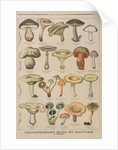Good and bad mushrooms by French School