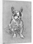 'Bouboule', the bulldog of Madame Palmyre at La Souris by Henri de Toulouse-Lautrec