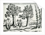 Landscape, Illustration from 'India Orientalis' by Theodore de Bry