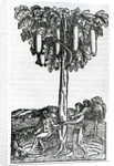 Tree harvest by French School