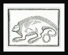 A Reptile found in the New World by Anonymous
